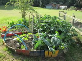 Vegetable Garden Design, North Devon.